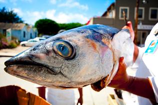 Albacore Tuna - http://www.flickr.com/photos/djs1021/3906751541/